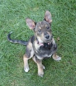 Dakota at 12 weeks